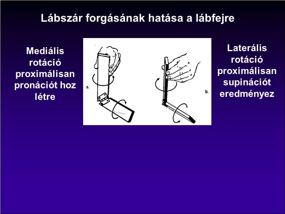 Lábszár forgásának hatása a lábfejre