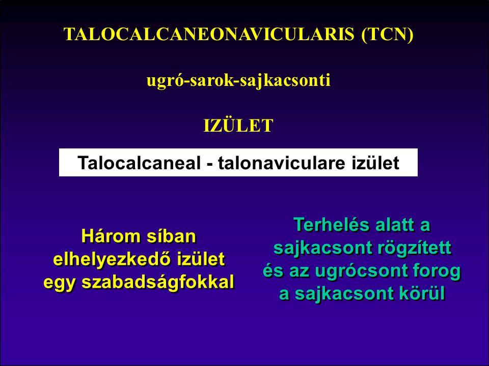 TALOCALCANEONAVICULARIS (TCN) ugró-sarok-sajkacsonti IZÜLET
