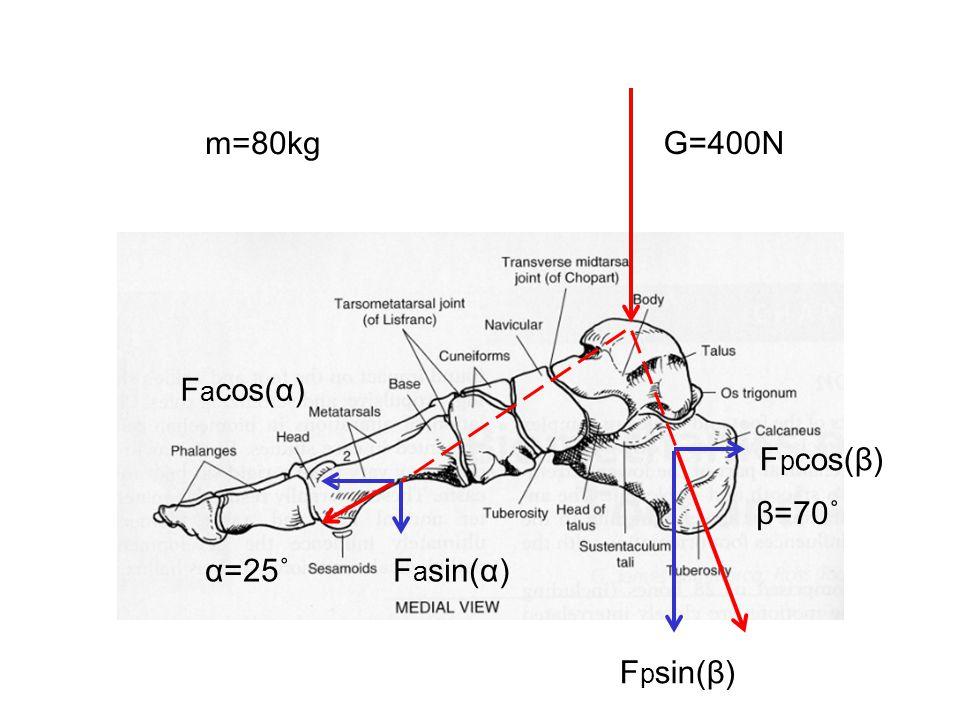 m=80kg G=400N Facos(α) Fpcos(β) β=70˚ α=25˚ Fasin(α) Fpsin(β)