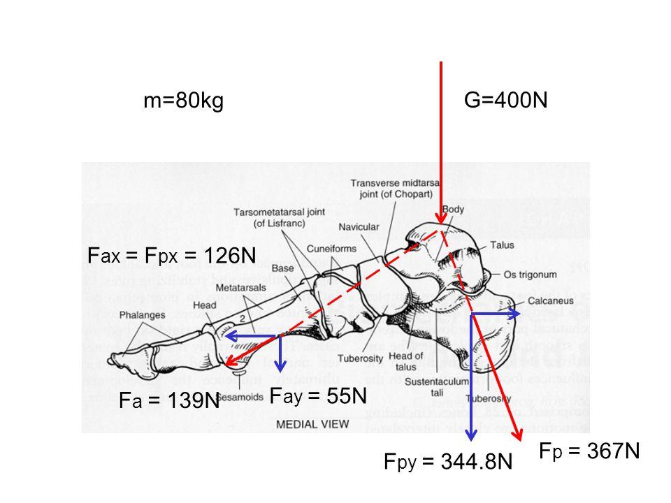 m=80kg G=400N Fax = Fpx = 126N Fay = 55N Fa = 139N Fp = 367N Fpy = 344.8N