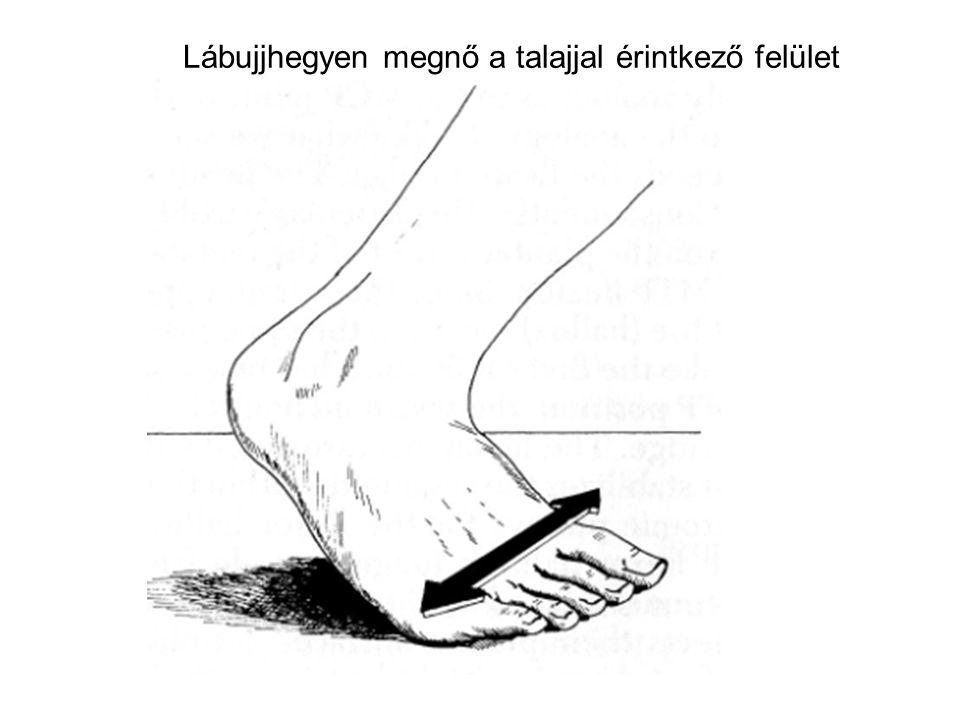 Lábujjhegyen megnő a talajjal érintkező felület