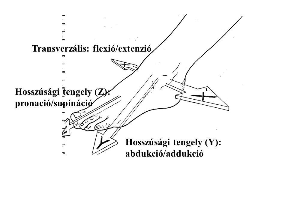 Transverzális: flexió/extenzió