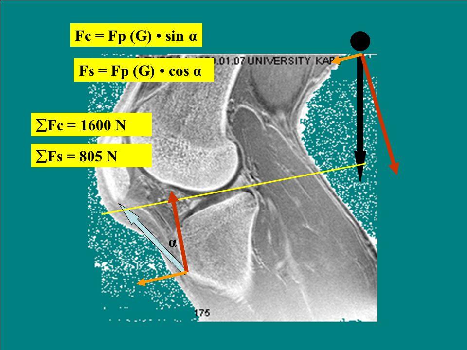 Fc = Fp (G) • sin α Fs = Fp (G) • cos α Fc = 1600 N Fs = 805 N α