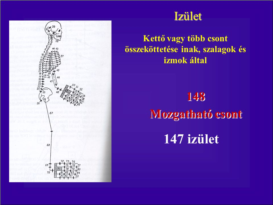 Kettő vagy több csont összeköttetése inak, szalagok és izmok által