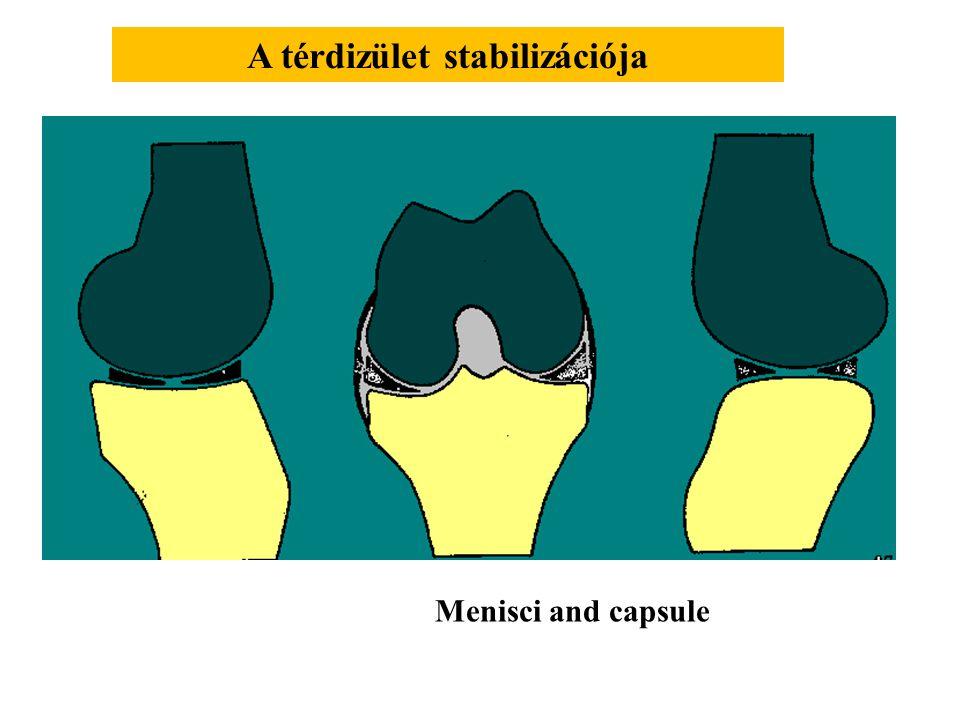 A térdizület stabilizációja
