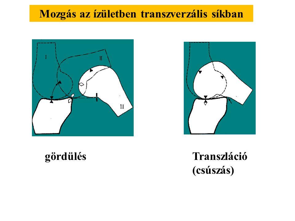 Mozgás az ízületben transzverzális síkban
