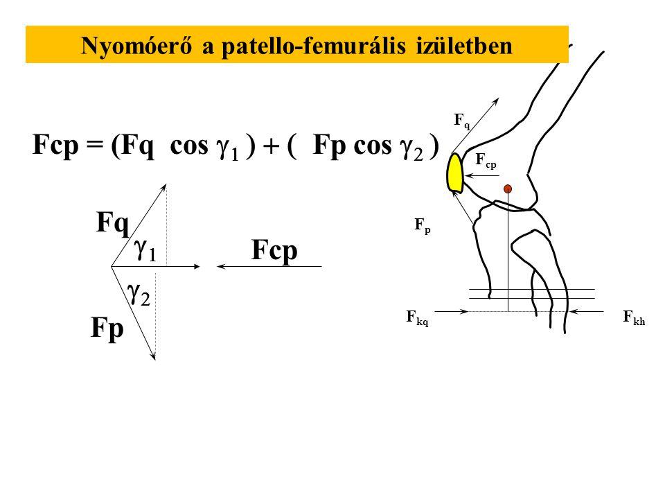 Nyomóerő a patello-femurális izületben