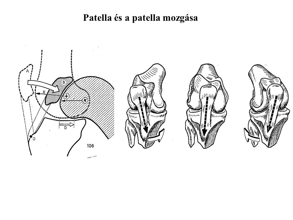 Patella és a patella mozgása