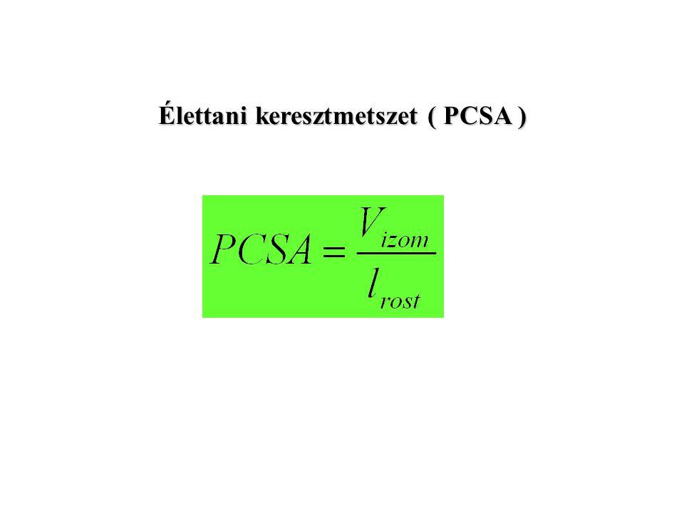 Élettani keresztmetszet ( PCSA )
