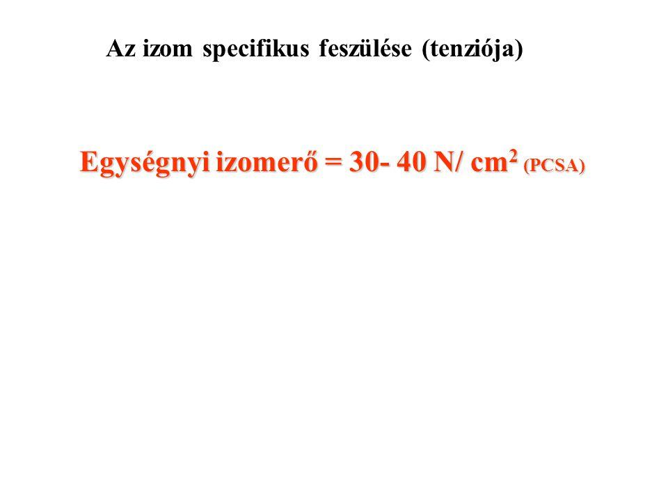 Az izom specifikus feszülése (tenziója)