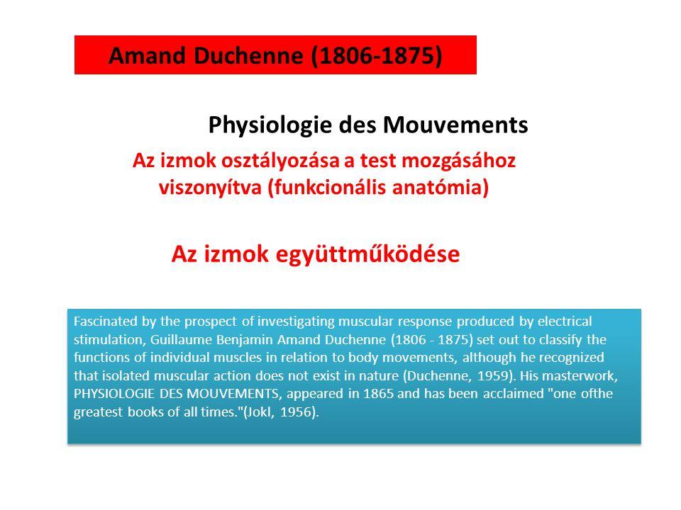 Physiologie des Mouvements Az izmok együttműködése