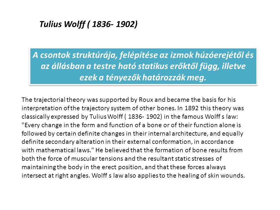 Tulius Wolff ( 1836- 1902)