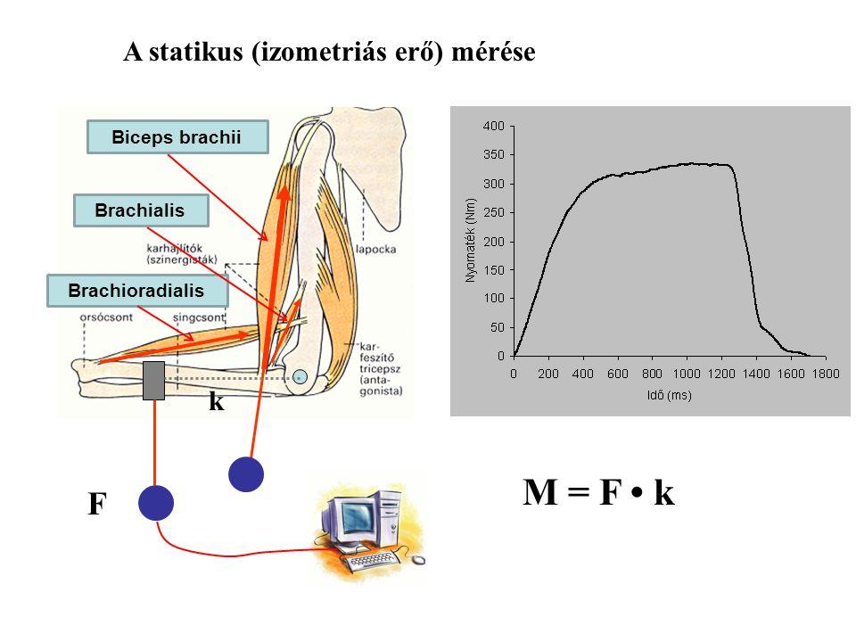M = F • k F A statikus (izometriás erő) mérése k Biceps brachii