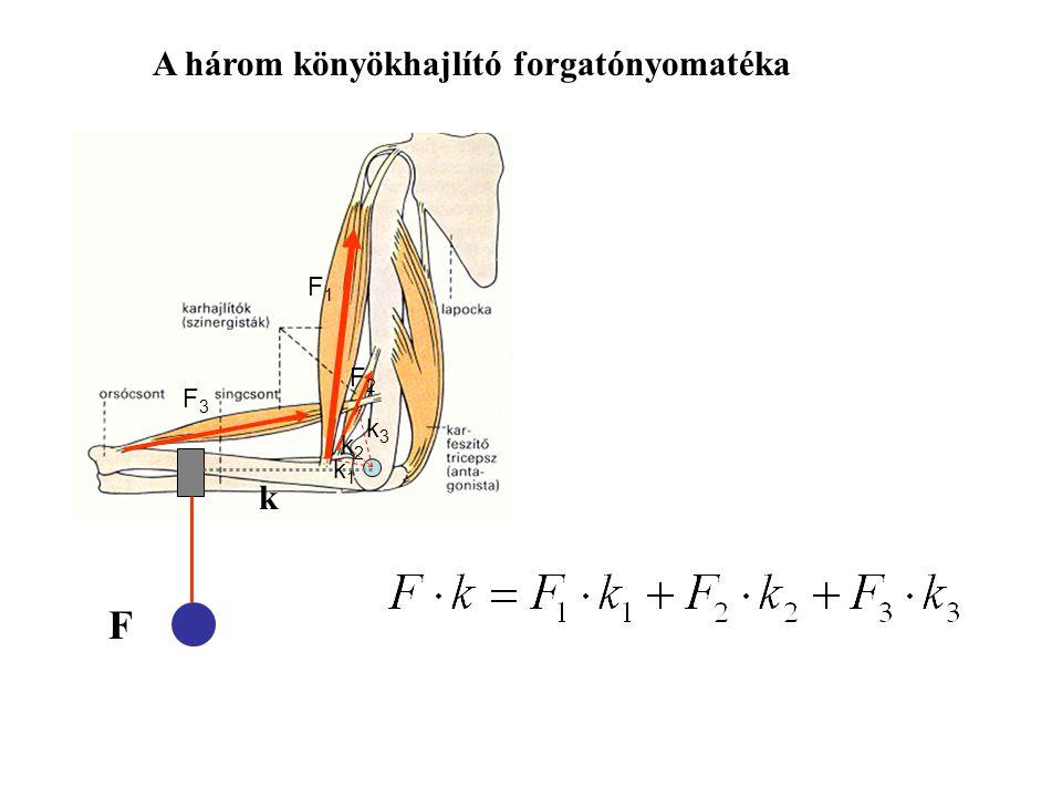 A három könyökhajlító forgatónyomatéka