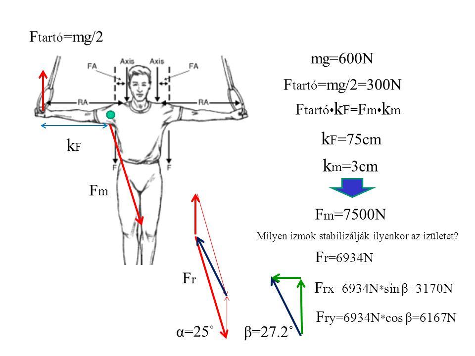 kF=75cm kF km=3cm Ftartó=mg/2 mg=600N Ftartó=mg/2=300N Ftartó•kF=Fm•km