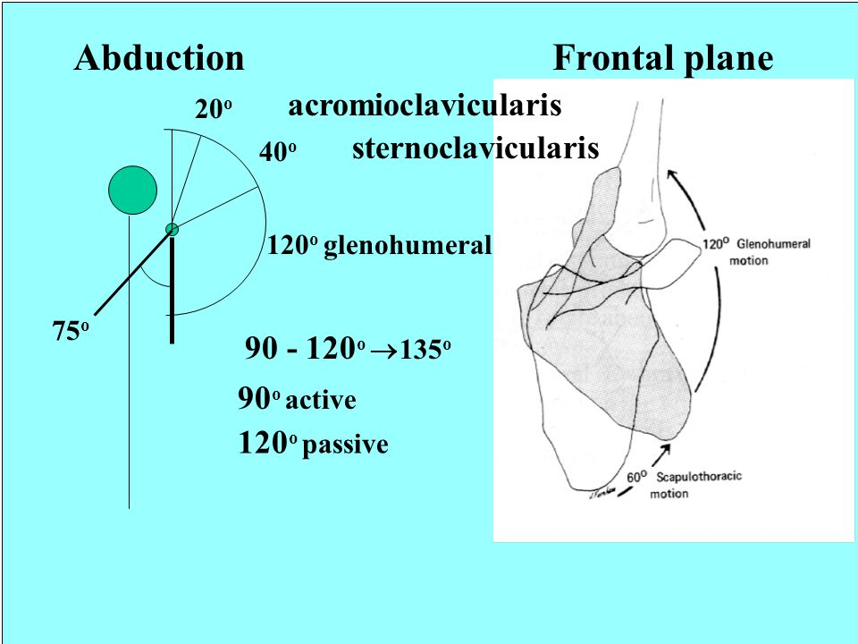 Abduction Frontal plane acromioclavicularis sternoclavicularis