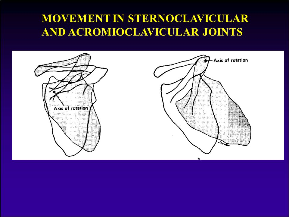 MOVEMENT IN STERNOCLAVICULAR AND ACROMIOCLAVICULAR JOINTS