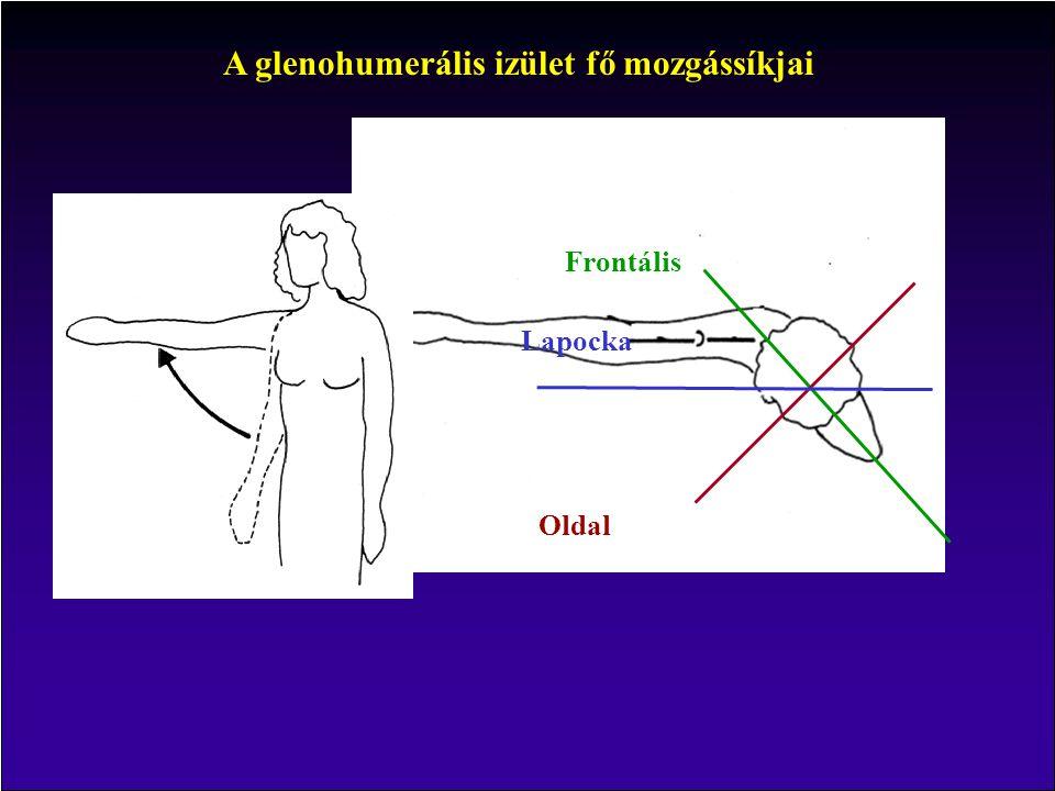 A glenohumerális izület fő mozgássíkjai