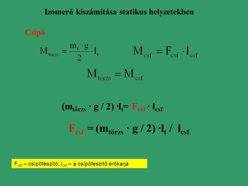 (mtörzs · g / 2) ·lt= Fcsf · lcsf Fcsf = (mtörzs · g / 2) ·lt / lcsf