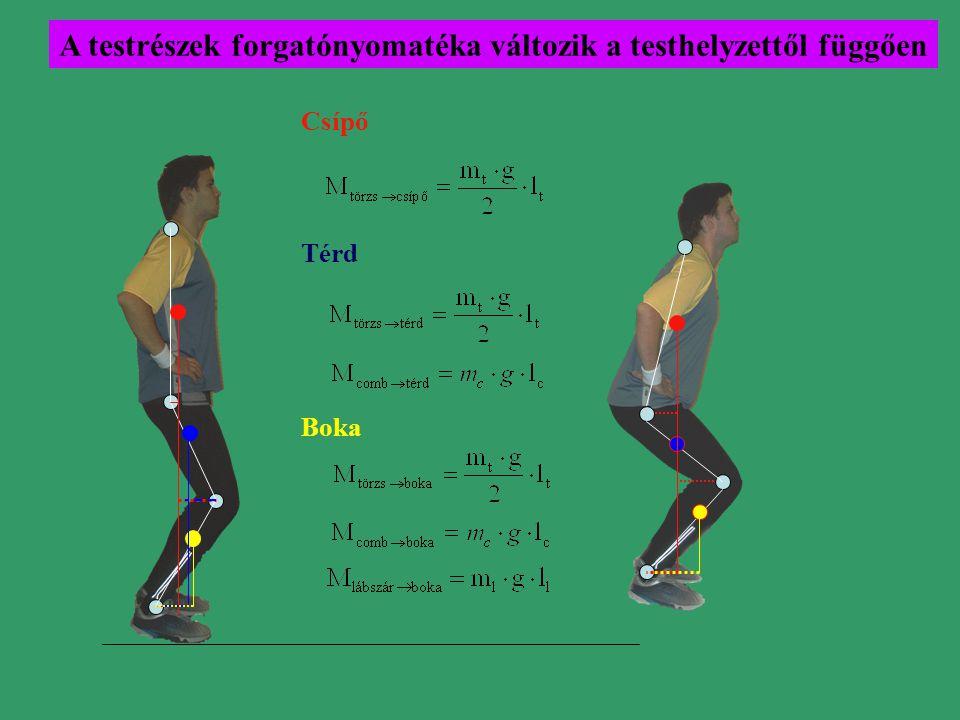 A testrészek forgatónyomatéka változik a testhelyzettől függően