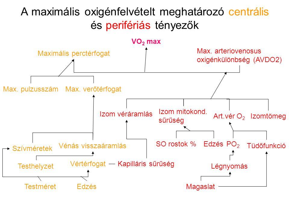 A maximális oxigénfelvételt meghatározó centrális és perifériás tényezők