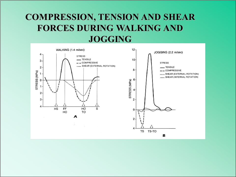 COMPRESSION, TENSION AND SHEAR FORCES DURING WALKING AND JOGGING
