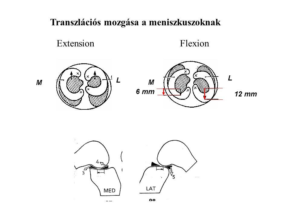 Transzlációs mozgása a meniszkuszoknak