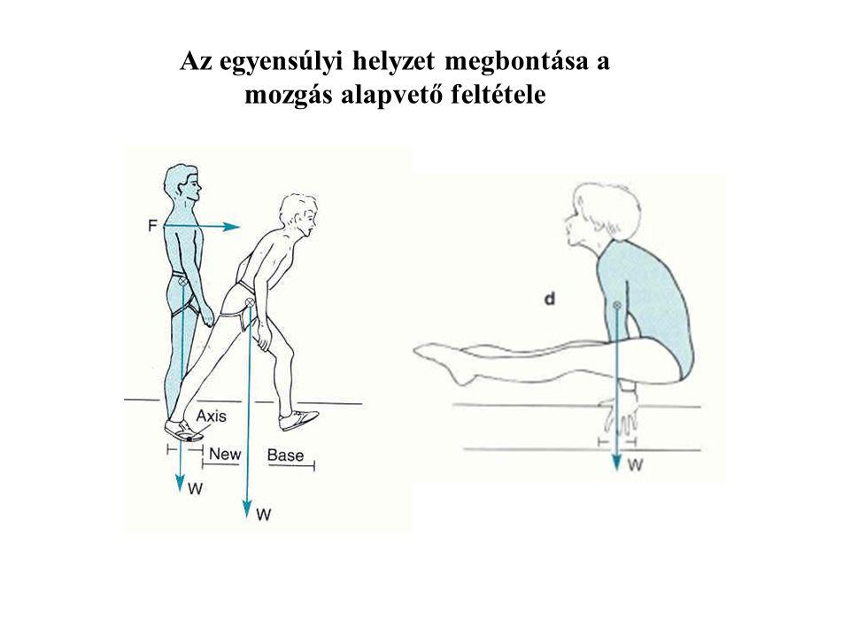 Az egyensúlyi helyzet megbontása a mozgás alapvető feltétele