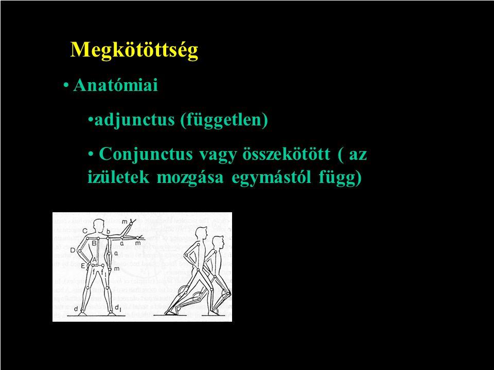 Megkötöttség Anatómiai adjunctus (független)