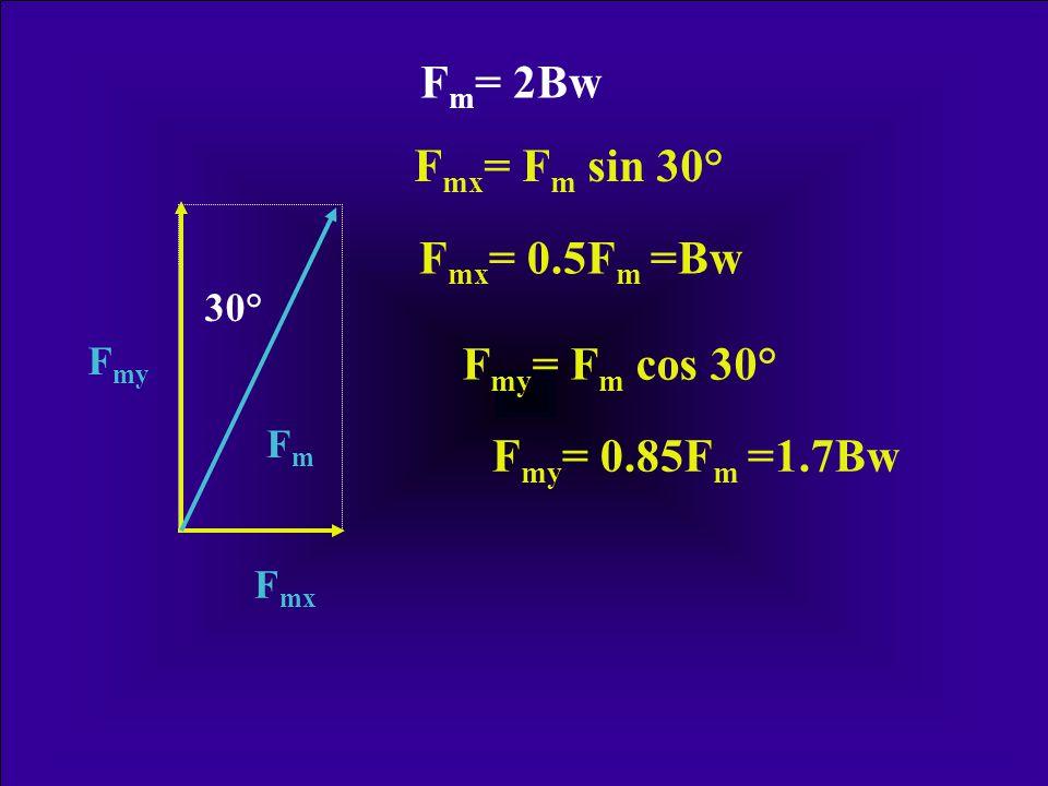 Fm= 2Bw Fmx= Fm sin 30° Fmx= 0.5Fm =Bw Fmy= Fm cos 30°