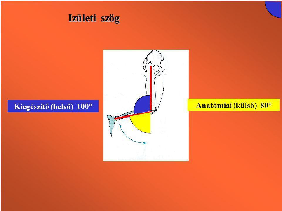 Izületi szög Kiegészítő (belső) 100° Kiegészítő (belső) 180°