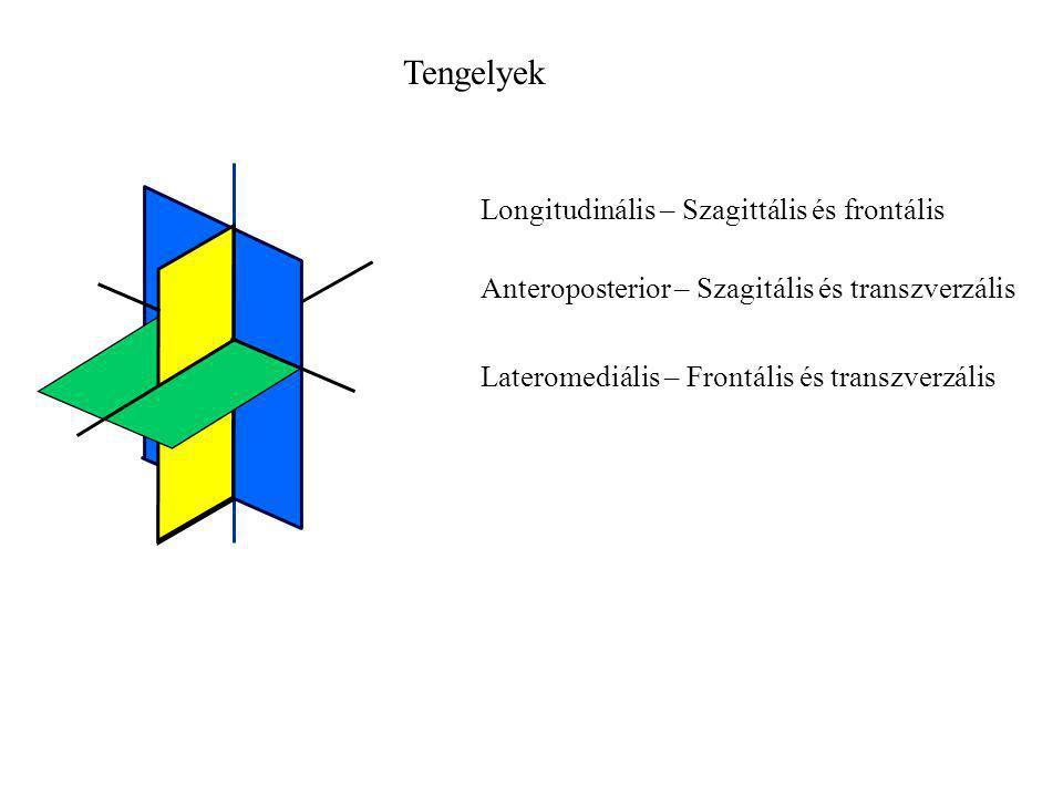 Tengelyek Longitudinális – Szagittális és frontális