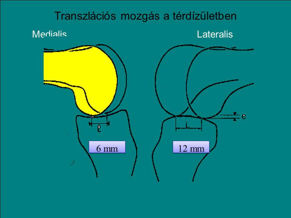 Transzlációs mozgás a térdízületben