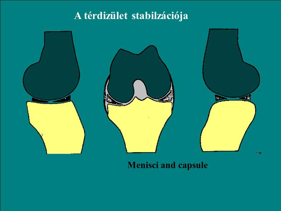 A térdizület stabilzációja