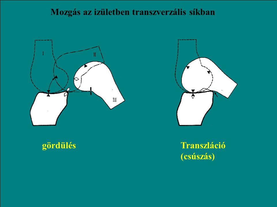 Mozgás az izületben transzverzális síkban
