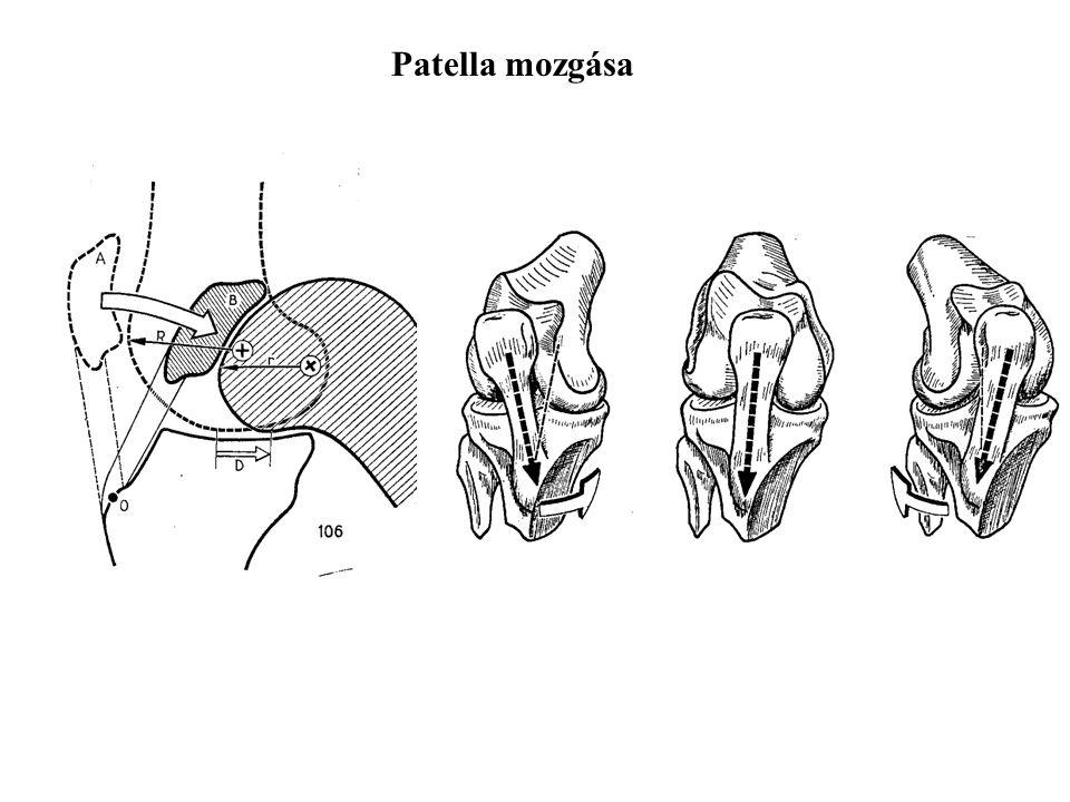 Patella mozgása