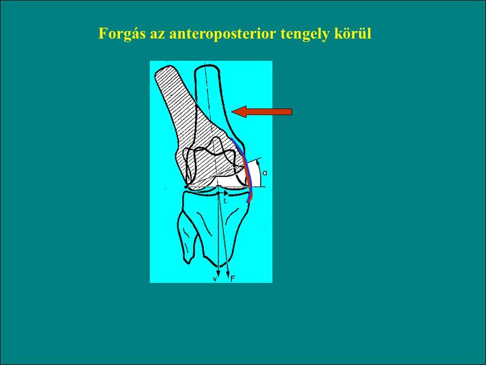 Forgás az anteroposterior tengely körül