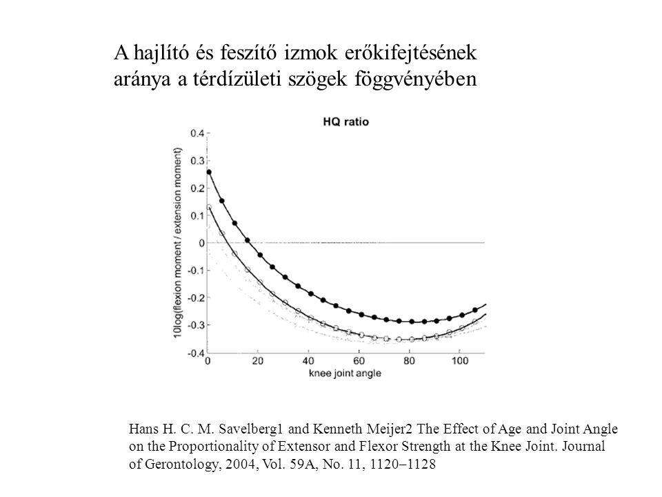A hajlító és feszítő izmok erőkifejtésének aránya a térdízületi szögek föggvényében