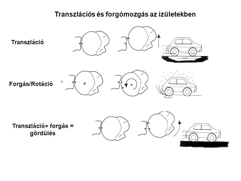 Transzlációs és forgómozgás az izületekben