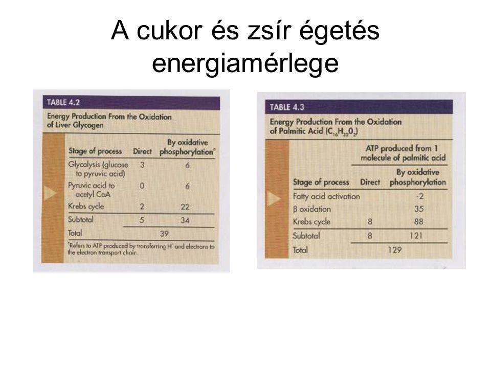 A cukor és zsír égetés energiamérlege