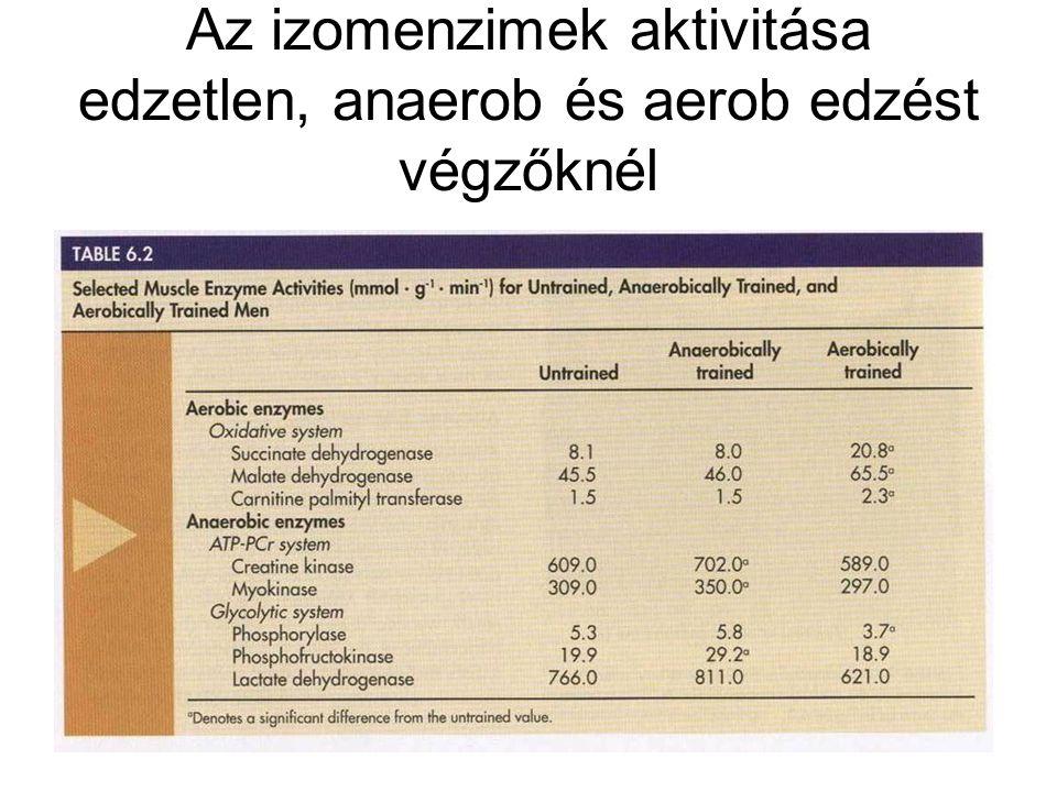 Az izomenzimek aktivitása edzetlen, anaerob és aerob edzést végzőknél