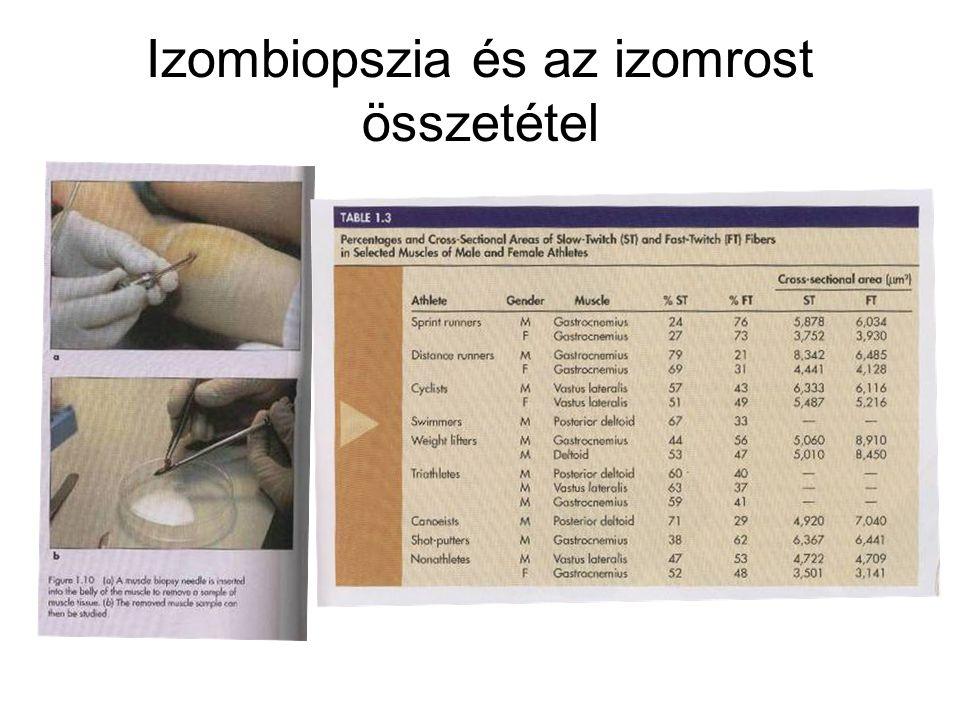 Izombiopszia és az izomrost összetétel