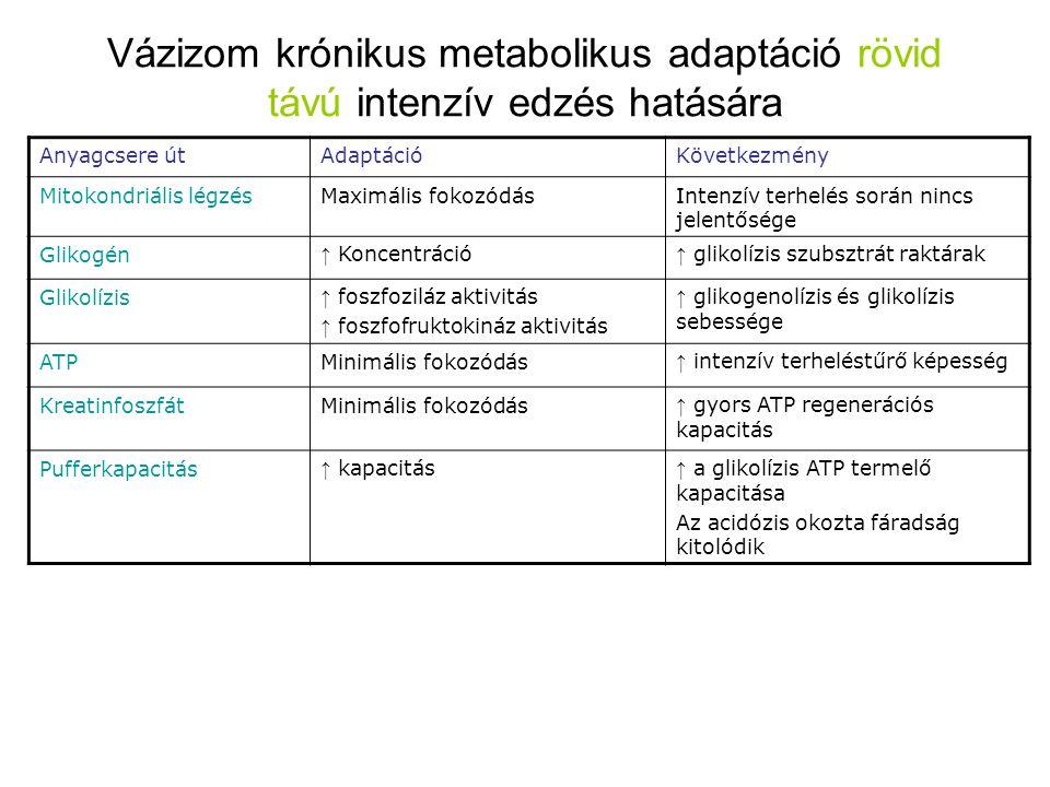 Vázizom krónikus metabolikus adaptáció rövid távú intenzív edzés hatására