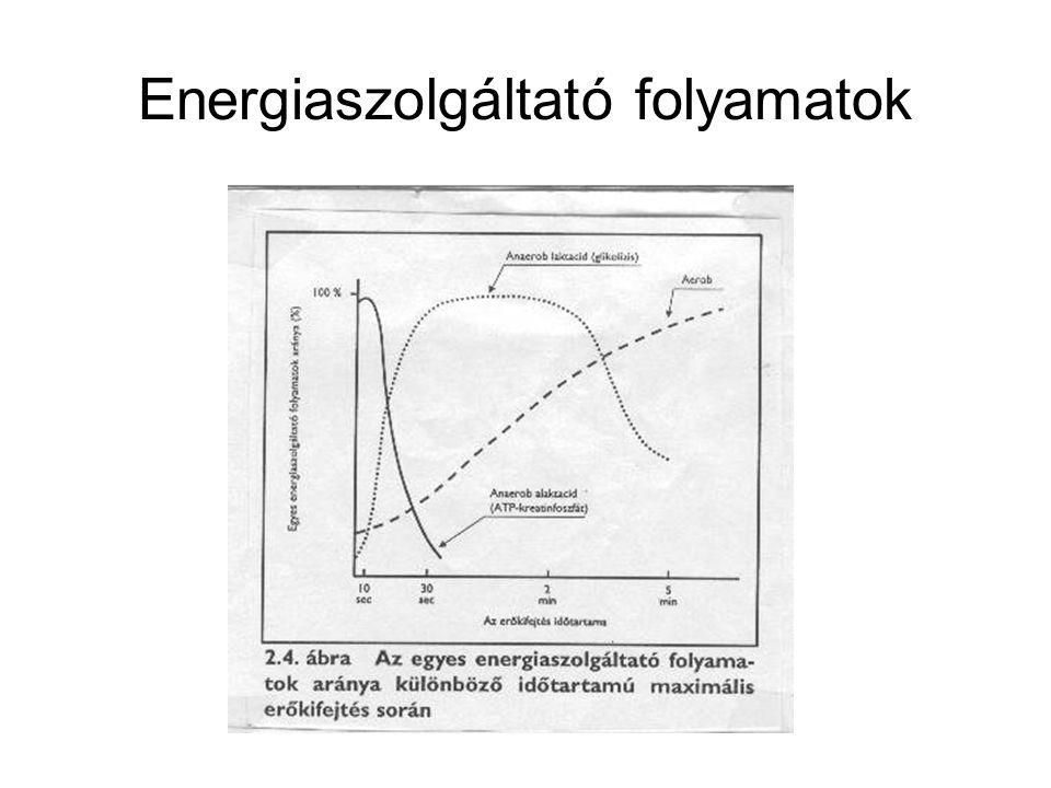 Energiaszolgáltató folyamatok