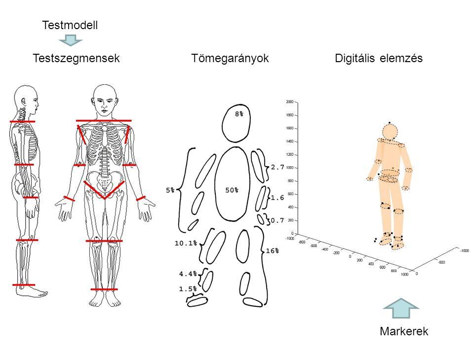 Testmodell Testszegmensek Tömegarányok Digitális elemzés Markerek
