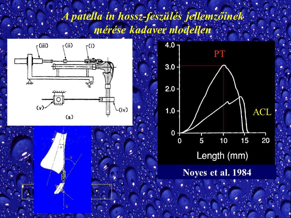 A patella ín hossz-feszülés jellemzőinek mérése kadaver modellen