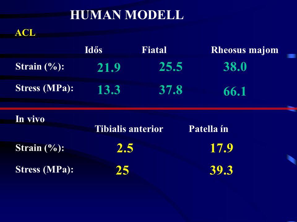 HUMAN MODELL ACL. Idős. Fiatal. Rheosus majom. Strain (%): Stress (MPa): 21.9. 25.5. 38.0. 13.3.