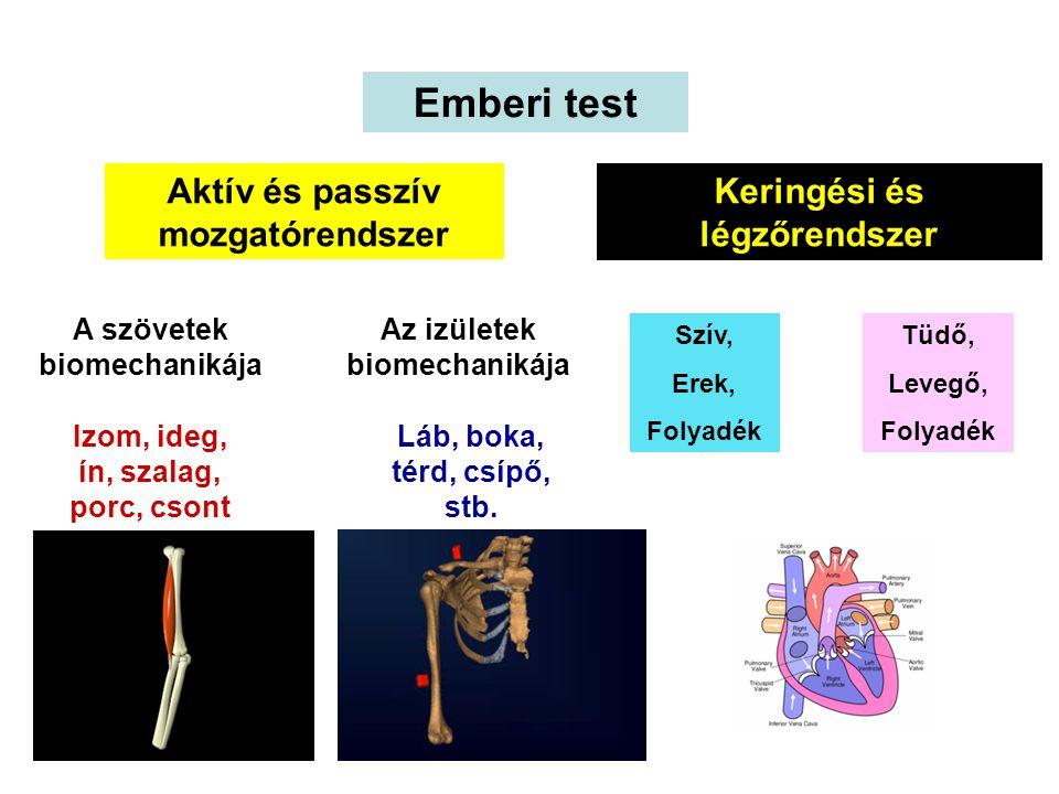 Emberi test Aktív és passzív mozgatórendszer