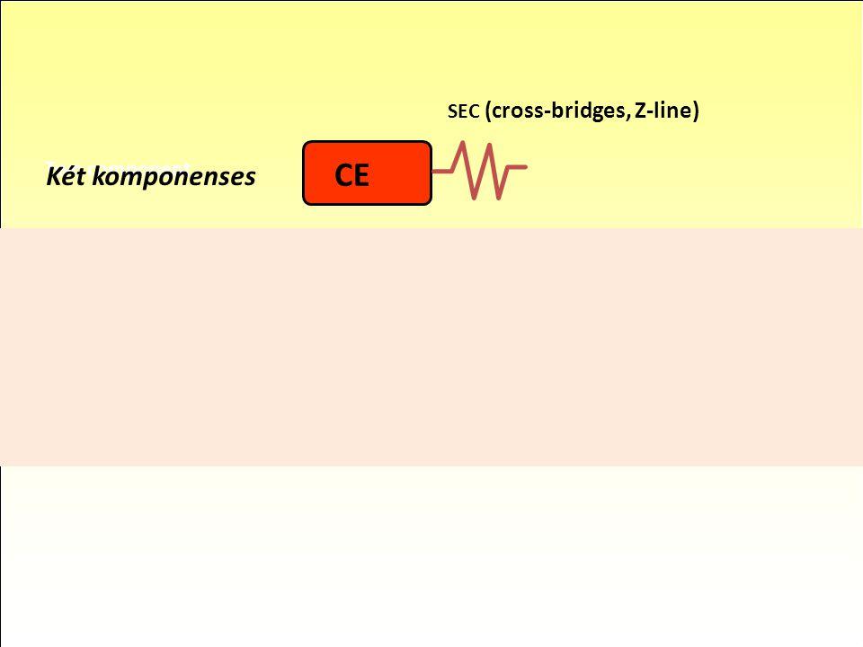 CE CE Két komponenses Három komponenses SEC (cross-bridges, Z-line)