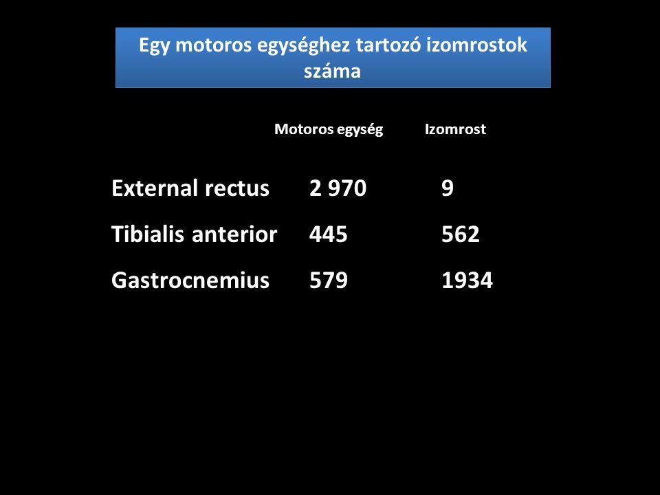 Egy motoros egységhez tartozó izomrostok száma